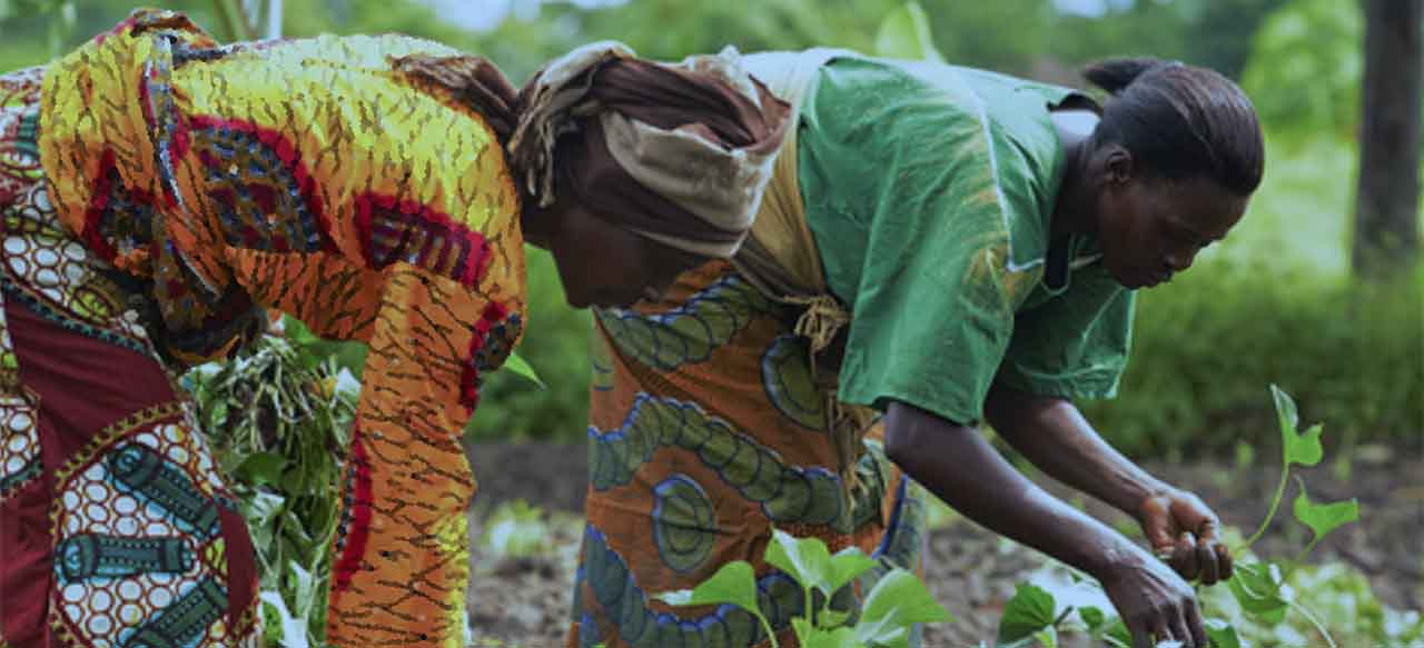 African women working in the fields